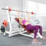 Ghế đẩy ngực trên Elip YL28 New