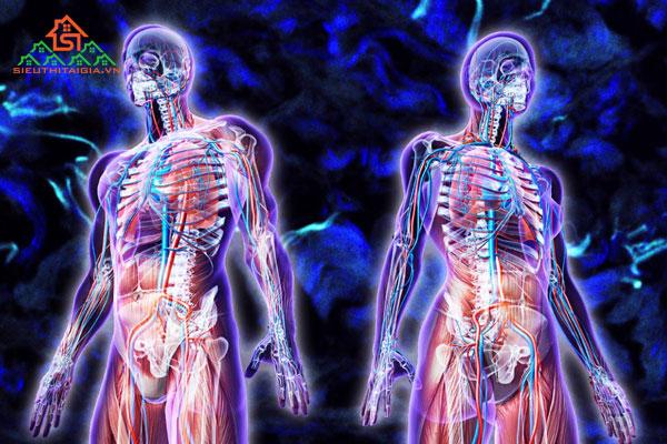 Cấu tạo cơ thể người