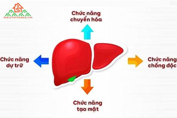 Chức năng của gan
