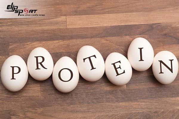 protein là gì