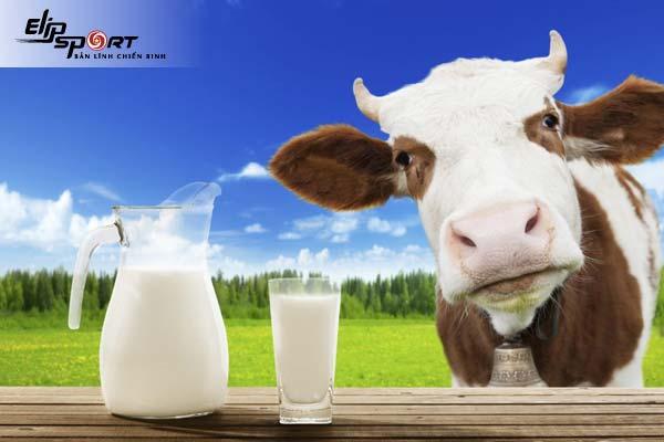 tác hại của sữa bò