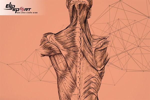 Dị hóa cơ bắp là gì