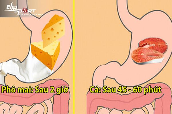 thức ăn tiêu hóa trong bao lâu