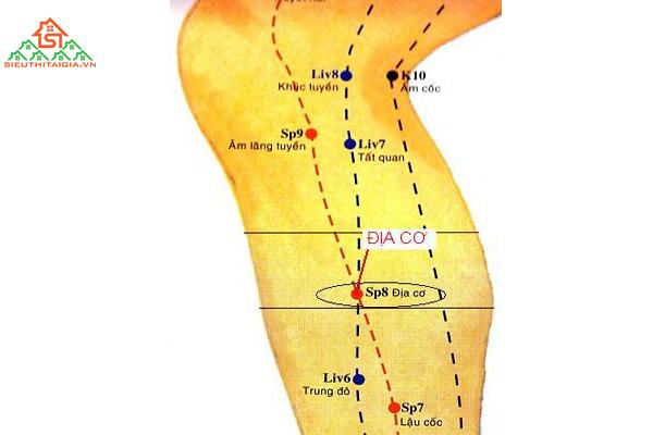 Huyệt địa cơ nằm ở vị trí nào và tác dụng của nó