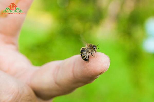 Bị ong đốt bôi gì cho nhanh lành và giảm sưng?