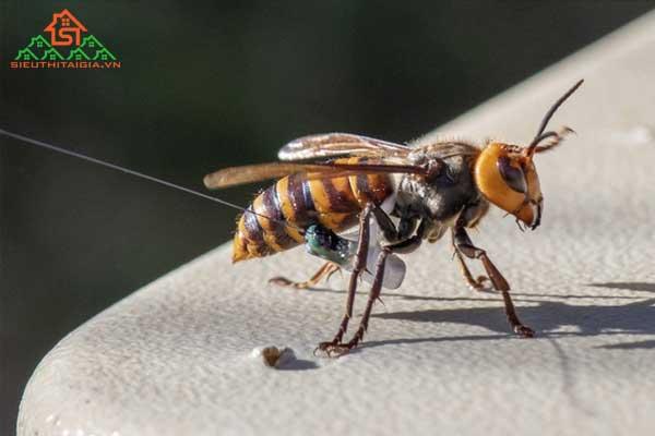 bị côn trùng cắn sưng phù