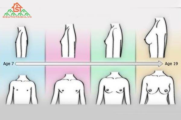 ngực của con gái phát triển như thế nào