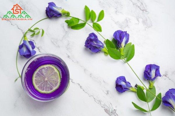 cách uống hoa đậu biếc trị tiểu đường