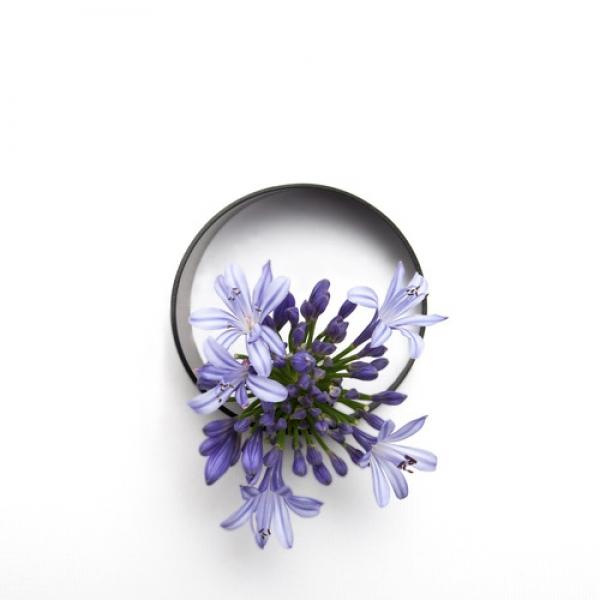Bình hoa không đối xứng